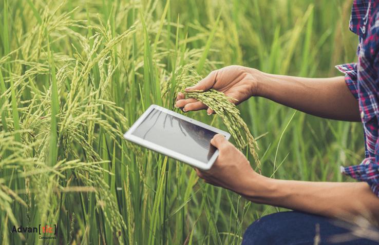 BI y el sector agroalimentario